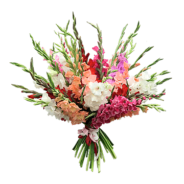 Blumenstrauß aus Gladiolen