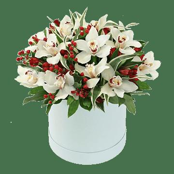 Orchideen in einer Box