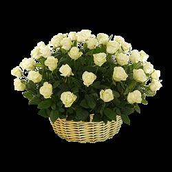 Korb mit den weißen Rosen