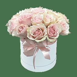 Rosa Rosen in einer Box