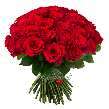 Blumenstrauß aus roten Rosen (50 cm.)