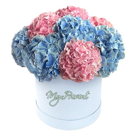 Vielfarbigen Hortensien in einer Box