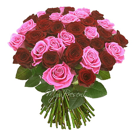 Blumenstrauß aus den roten und rosigen Rosen (60 cm.)